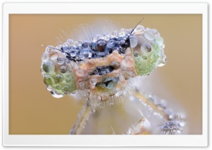 Insect Eyes Macro HD Wide Wallpaper for Widescreen