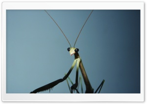 Insects Ultra HD Wallpaper for 4K UHD Widescreen desktop, tablet & smartphone