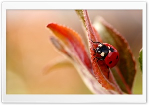 Insects HD Wide Wallpaper for Widescreen