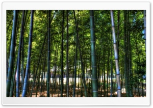 Inside The Bamboo Forest HD Wide Wallpaper for Widescreen