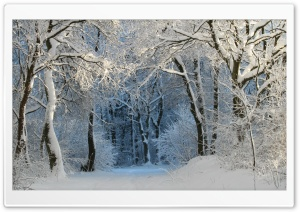 Into the Forest, Winter HD Wide Wallpaper for Widescreen