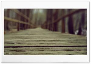 Into the Woods HD Wide Wallpaper for 4K UHD Widescreen desktop & smartphone