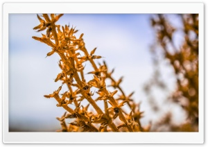 Iran Dried Plant HD Wide Wallpaper for Widescreen