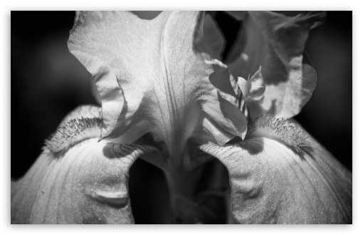 Iris Black And White HD wallpaper for Wide 16:10 5:3 Widescreen WHXGA WQXGA WUXGA WXGA WGA ; HD 16:9 High Definition WQHD QWXGA 1080p 900p 720p QHD nHD ; UHD 16:9 WQHD QWXGA 1080p 900p 720p QHD nHD ; Standard 4:3 5:4 3:2 Fullscreen UXGA XGA SVGA QSXGA SXGA DVGA HVGA HQVGA devices ( Apple PowerBook G4 iPhone 4 3G 3GS iPod Touch ) ; Tablet 1:1 ; iPad 1/2/Mini ; Mobile 4:3 5:3 3:2 16:9 5:4 - UXGA XGA SVGA WGA DVGA HVGA HQVGA devices ( Apple PowerBook G4 iPhone 4 3G 3GS iPod Touch ) WQHD QWXGA 1080p 900p 720p QHD nHD QSXGA SXGA ;