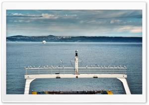 Istanbul Ferry Seagull HD Wide Wallpaper for Widescreen