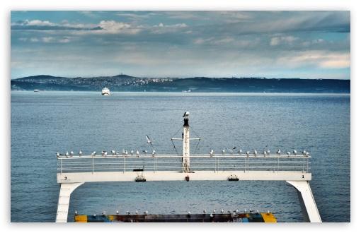 Istanbul Ferry Seagull ❤ 4K UHD Wallpaper for Wide 16:10 5:3 Widescreen WHXGA WQXGA WUXGA WXGA WGA ; 4K UHD 16:9 Ultra High Definition 2160p 1440p 1080p 900p 720p ; UHD 16:9 2160p 1440p 1080p 900p 720p ; Mobile 5:3 - WGA ;