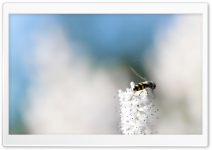 It Is A Bee HD Wide Wallpaper for Widescreen
