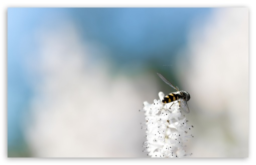 It Is A Bee HD wallpaper for Standard 4:3 5:4 Fullscreen UXGA XGA SVGA QSXGA SXGA ; Wide 16:10 5:3 Widescreen WHXGA WQXGA WUXGA WXGA WGA ; HD 16:9 High Definition WQHD QWXGA 1080p 900p 720p QHD nHD ; Mobile VGA WVGA iPhone iPad PSP Phone - VGA QVGA Smartphone ( PocketPC GPS iPod Zune BlackBerry HTC Samsung LG Nokia Eten Asus ) WVGA WQVGA Smartphone ( HTC Samsung Sony Ericsson LG Vertu MIO ) HVGA Smartphone ( Apple iPhone iPod BlackBerry HTC Samsung Nokia ) Sony PSP Zune HD Zen ; Tablet 2 Android 3 DVGA HVGA HQVGA devices ( Apple PowerBook G4 iPhone 4 3G 3GS iPod Touch ) ; Dual 4:3 5:4 5:3 16:9 3:2 UXGA XGA SVGA QSXGA SXGA WGA WQHD QWXGA 1080p 900p 720p QHD nHD DVGA HVGA HQVGA devices ( Apple PowerBook G4 iPhone 4 3G 3GS iPod Touch ) ;
