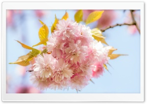 Its Springtime HD Wide Wallpaper for Widescreen