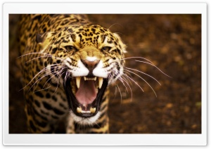 Jaguar HD Wide Wallpaper for Widescreen