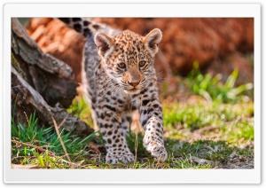 Jaguar Cub, Karlova Ves, Bratislava, Bratislavsky, SK HD Wide Wallpaper for Widescreen