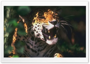 Jaguar Roaring HD Wide Wallpaper for Widescreen