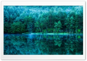 Japan Pond Forest HD Wide Wallpaper for Widescreen