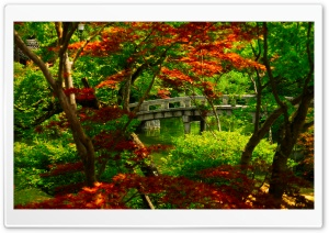 Japanese Garden (Kyoto) HD Wide Wallpaper for Widescreen