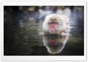 Japanese Macaques, Nagano, Japan HD Wide Wallpaper for 4K UHD Widescreen desktop & smartphone