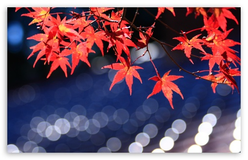Japanese Maple Leaves Bokeh HD wallpaper for Wide 16:10 5:3 Widescreen WHXGA WQXGA WUXGA WXGA WGA ; HD 16:9 High Definition WQHD QWXGA 1080p 900p 720p QHD nHD ; UHD 16:9 WQHD QWXGA 1080p 900p 720p QHD nHD ; Standard 4:3 5:4 3:2 Fullscreen UXGA XGA SVGA QSXGA SXGA DVGA HVGA HQVGA devices ( Apple PowerBook G4 iPhone 4 3G 3GS iPod Touch ) ; Tablet 1:1 ; iPad 1/2/Mini ; Mobile 4:3 5:3 3:2 16:9 5:4 - UXGA XGA SVGA WGA DVGA HVGA HQVGA devices ( Apple PowerBook G4 iPhone 4 3G 3GS iPod Touch ) WQHD QWXGA 1080p 900p 720p QHD nHD QSXGA SXGA ; Dual 4:3 5:4 UXGA XGA SVGA QSXGA SXGA ;