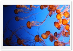 Jelly Ultra HD Wallpaper for 4K UHD Widescreen desktop, tablet & smartphone