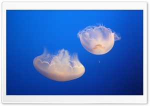 Jelly HD Wide Wallpaper for Widescreen