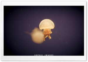 Jellyfish HD Wide Wallpaper for 4K UHD Widescreen desktop & smartphone