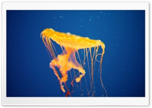 Jellyfish Ultra HD Wallpaper for 4K UHD Widescreen desktop, tablet & smartphone