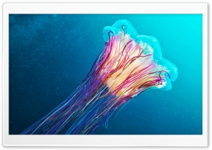 Jellyfish HD Wide Wallpaper for Widescreen