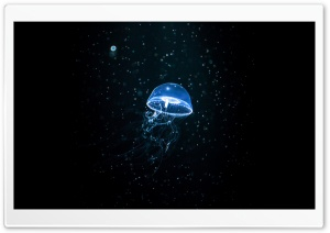 Jellyfish Dark Ultra HD Wallpaper for 4K UHD Widescreen desktop, tablet & smartphone