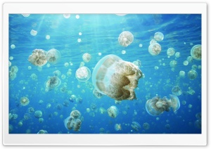 Jellyfish Invasion HD Wide Wallpaper for 4K UHD Widescreen desktop & smartphone
