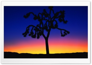 Joshua Tree At Dusk HD Wide Wallpaper for Widescreen