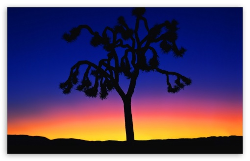 Joshua Tree At Dusk HD wallpaper for Wide 16:10 5:3 Widescreen WHXGA WQXGA WUXGA WXGA WGA ; Standard 4:3 5:4 Fullscreen UXGA XGA SVGA QSXGA SXGA ; Tablet 1:1 ; iPad 1/2/Mini ; Mobile 4:3 5:3 5:4 - UXGA XGA SVGA WGA QSXGA SXGA ;