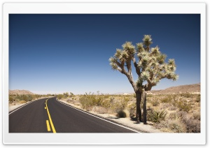 Joshua Tree Desert Road HD Wide Wallpaper for 4K UHD Widescreen desktop & smartphone