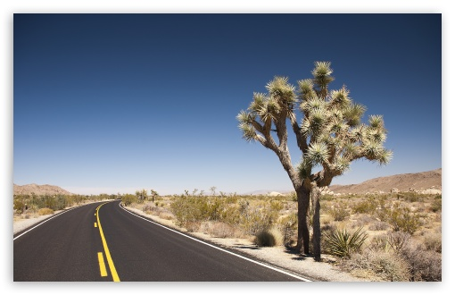 Joshua Tree Desert Road ❤ 4K UHD Wallpaper for Wide 16:10 5:3 Widescreen WHXGA WQXGA WUXGA WXGA WGA ; 4K UHD 16:9 Ultra High Definition 2160p 1440p 1080p 900p 720p ; UHD 16:9 2160p 1440p 1080p 900p 720p ; Standard 4:3 5:4 3:2 Fullscreen UXGA XGA SVGA QSXGA SXGA DVGA HVGA HQVGA ( Apple PowerBook G4 iPhone 4 3G 3GS iPod Touch ) ; Tablet 1:1 ; iPad 1/2/Mini ; Mobile 4:3 5:3 3:2 16:9 5:4 - UXGA XGA SVGA WGA DVGA HVGA HQVGA ( Apple PowerBook G4 iPhone 4 3G 3GS iPod Touch ) 2160p 1440p 1080p 900p 720p QSXGA SXGA ;