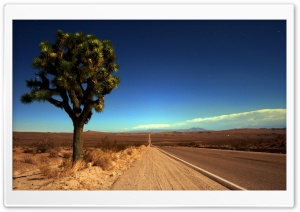 Joshua Tree Highway HD Wide Wallpaper for Widescreen