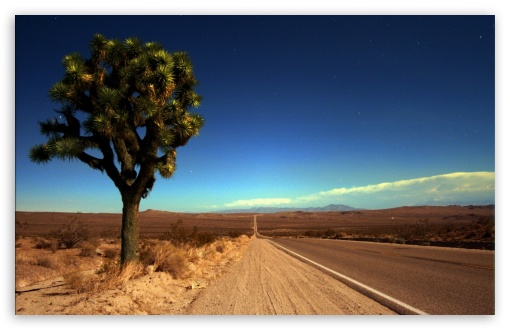 Joshua Tree Highway HD wallpaper for Wide 16:10 5:3 Widescreen WHXGA WQXGA WUXGA WXGA WGA ; HD 16:9 High Definition WQHD QWXGA 1080p 900p 720p QHD nHD ; Standard 4:3 5:4 3:2 Fullscreen UXGA XGA SVGA QSXGA SXGA DVGA HVGA HQVGA devices ( Apple PowerBook G4 iPhone 4 3G 3GS iPod Touch ) ; iPad 1/2/Mini ; Mobile 4:3 5:3 3:2 16:9 5:4 - UXGA XGA SVGA WGA DVGA HVGA HQVGA devices ( Apple PowerBook G4 iPhone 4 3G 3GS iPod Touch ) WQHD QWXGA 1080p 900p 720p QHD nHD QSXGA SXGA ;