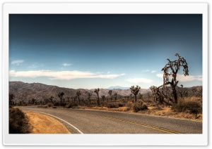 Joshua Tree National Park HD Wide Wallpaper for 4K UHD Widescreen desktop & smartphone