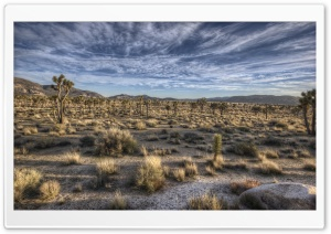 Joshua Trees HD Wide Wallpaper for Widescreen