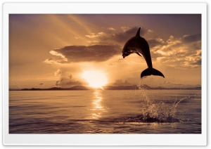 Jumping Dolphin HD Wide Wallpaper for 4K UHD Widescreen desktop & smartphone