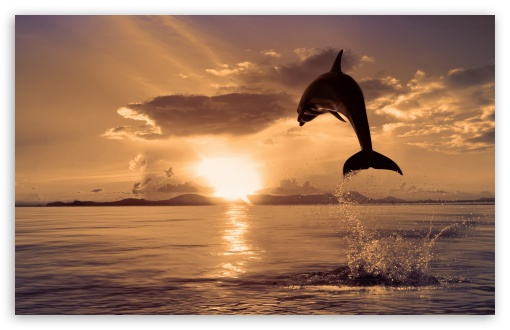Jumping Dolphin ❤ 4K UHD Wallpaper for Wide 16:10 5:3 Widescreen WHXGA WQXGA WUXGA WXGA WGA ; 4K UHD 16:9 Ultra High Definition 2160p 1440p 1080p 900p 720p ; Standard 4:3 5:4 3:2 Fullscreen UXGA XGA SVGA QSXGA SXGA DVGA HVGA HQVGA ( Apple PowerBook G4 iPhone 4 3G 3GS iPod Touch ) ; Tablet 1:1 ; iPad 1/2/Mini ; Mobile 4:3 5:3 3:2 16:9 5:4 - UXGA XGA SVGA WGA DVGA HVGA HQVGA ( Apple PowerBook G4 iPhone 4 3G 3GS iPod Touch ) 2160p 1440p 1080p 900p 720p QSXGA SXGA ;