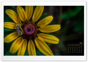 June HD Wide Wallpaper for Widescreen