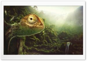 Jungle Chameleon HD Wide Wallpaper for Widescreen
