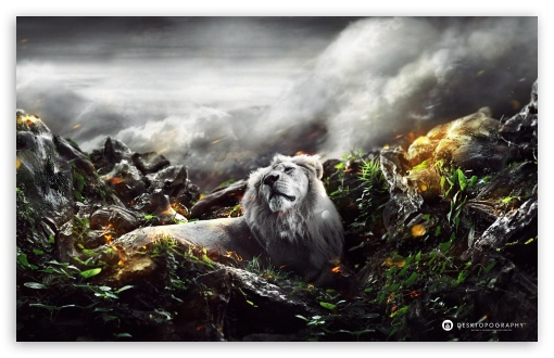 Jungle Lion HD wallpaper for Wide 16:10 5:3 Widescreen WHXGA WQXGA WUXGA WXGA WGA ; HD 16:9 High Definition WQHD QWXGA 1080p 900p 720p QHD nHD ; Tablet 1:1 ; iPad 1/2/Mini ; Mobile 4:3 5:3 3:2 16:9 - UXGA XGA SVGA WGA DVGA HVGA HQVGA devices ( Apple PowerBook G4 iPhone 4 3G 3GS iPod Touch ) WQHD QWXGA 1080p 900p 720p QHD nHD ; Dual 4:3 5:4 UXGA XGA SVGA QSXGA SXGA ;