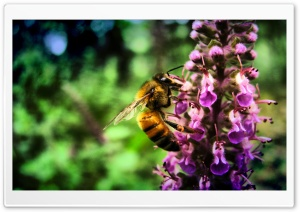 Just Another Bee HD Wide Wallpaper for Widescreen