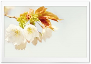 Just Bloom Ultra HD Wallpaper for 4K UHD Widescreen desktop, tablet & smartphone