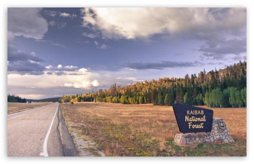 Kaibab National Forest, Arizona ❤ 4K UHD Wallpaper for Wide 16:10 5:3 Widescreen WHXGA WQXGA WUXGA WXGA WGA ; 4K UHD 16:9 Ultra High Definition 2160p 1440p 1080p 900p 720p ; Mobile 5:3 16:9 - WGA 2160p 1440p 1080p 900p 720p ;