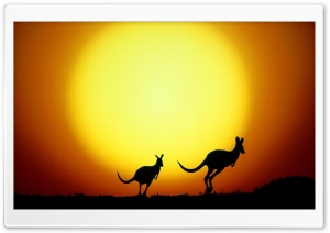 Kangaroo HD Wide Wallpaper for Widescreen