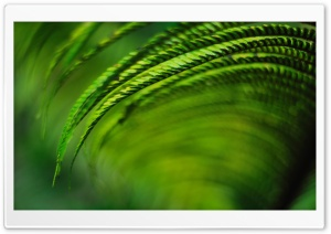 Kauai Fern HD Wide Wallpaper for Widescreen