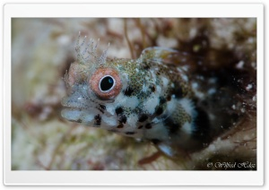 Key Largo Fish Underwater Ultra HD Wallpaper for 4K UHD Widescreen desktop, tablet & smartphone
