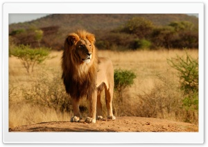 King Of The Jungle HD Wide Wallpaper for 4K UHD Widescreen desktop & smartphone