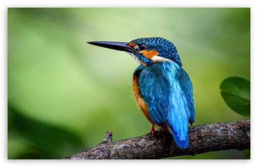 Kingfisher HD wallpaper for Wide 16:10 5:3 Widescreen WHXGA WQXGA WUXGA WXGA WGA ; UltraWide 21:9 24:10 ; HD 16:9 High Definition WQHD QWXGA 1080p 900p 720p QHD nHD ; UHD 16:9 WQHD QWXGA 1080p 900p 720p QHD nHD ; Standard 4:3 5:4 3:2 Fullscreen UXGA XGA SVGA QSXGA SXGA DVGA HVGA HQVGA devices ( Apple PowerBook G4 iPhone 4 3G 3GS iPod Touch ) ; Smartphone 3:2 DVGA HVGA HQVGA devices ( Apple PowerBook G4 iPhone 4 3G 3GS iPod Touch ) ; Tablet 1:1 ; iPad 1/2/Mini ; Mobile 4:3 5:3 3:2 16:9 5:4 - UXGA XGA SVGA WGA DVGA HVGA HQVGA devices ( Apple PowerBook G4 iPhone 4 3G 3GS iPod Touch ) WQHD QWXGA 1080p 900p 720p QHD nHD QSXGA SXGA ;