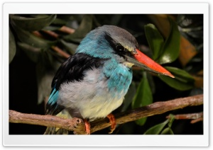 Kingfisher Close Look HD Wide Wallpaper for Widescreen