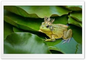 Kiss The Frog Prince Ultra HD Wallpaper for 4K UHD Widescreen desktop, tablet & smartphone